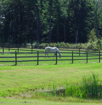 A picture of a horse in a green field