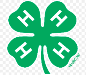 The logo for 4H in green
