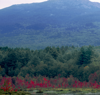 A picture of foliage in Keene, NH