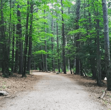 A trail in Swanzey New Hampshire